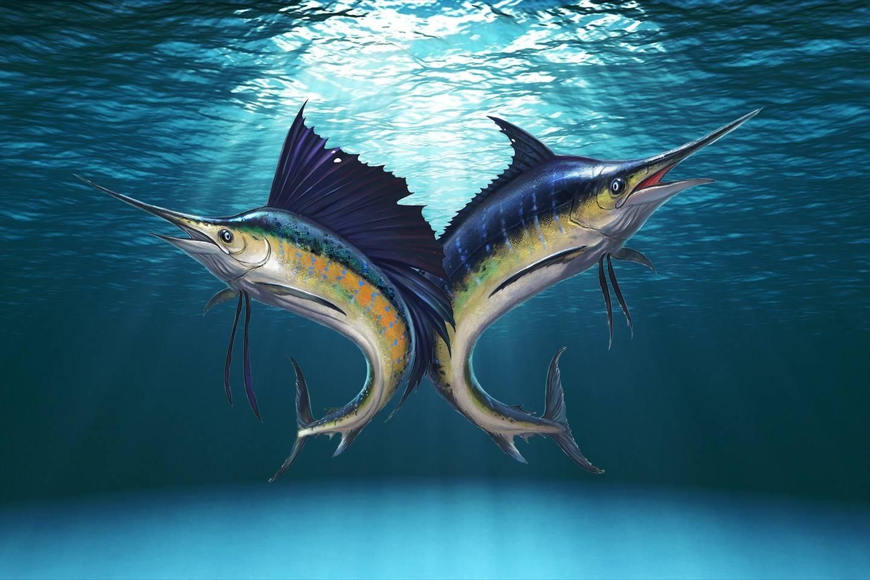 DOMINICAN REPUBLIC FISHING