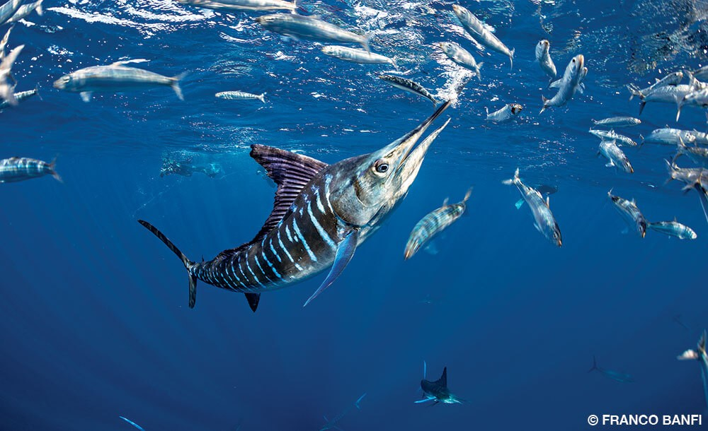 FISHING IN PUNTA CANA